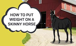 How to Put Weight on A Skinny Horse