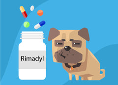 Rimadyl For Dogs: Helpful Or Harmful? | Innovet Pet
