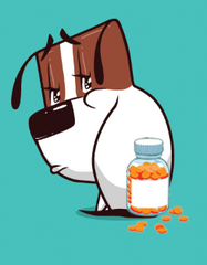 Your Guide To Levetiracetam For Your Dog | Innovet Pet