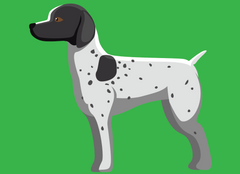 German Shorthaired Pointer | Innovet Pet