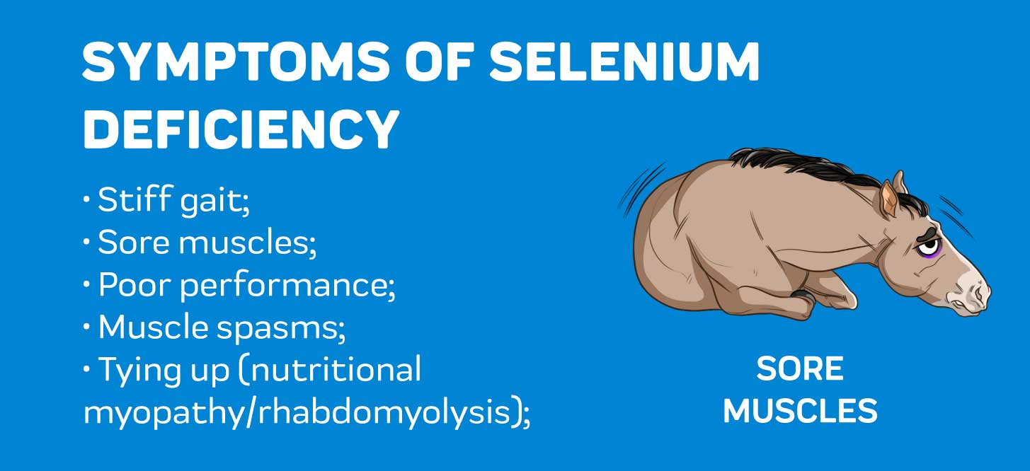 Sign of Selenium Deficiency in Horses