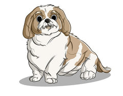 Shih Tzu Breed and Personality