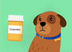 Carprofen For Dogs: The Side Effects To Be Aware Of | Innovet Pet