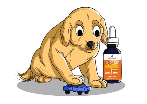 CBD for Motion Sickness, CBD Oil for Dogs, Car Sick Dogs, Remedy for Dog Nausea