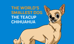 The World's Smallest Dog - The Teacup Chihuahua