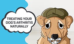 managing your dogs arthritis