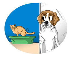 Why Do Dogs Eat Cat Poop? 10 ways To Stop It From Happening | Innovet Pet