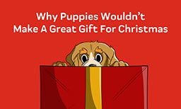 Why Puppies Wouldn't Make A Great Gift For Christmas