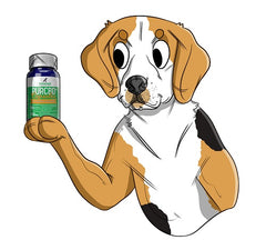 Why We Created Our Hemp CBD Capsules | Innovet Pet