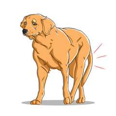 Natural pain relief for your Dogs | Innovet Pet