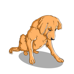 Natural pain relief for dogs with pain and inflammation| Innovet Pet