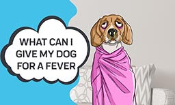 fever in dogs?