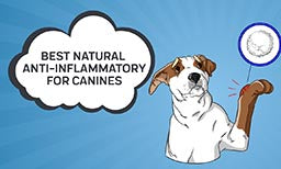 best natural anti inflammatory for canines