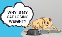 Why is My Cat Losing Weight?