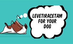 Your Guide To Levetiracetam For Your Dog
