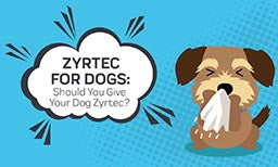 Zyrtec for Dogs - Should You Give Your Dog Zyrtec?