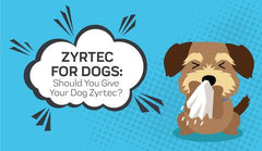 Zyrtec for Dog Allergies