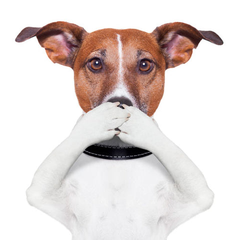 Why Dogs Have Bad Breath And 5 Quick Fixes Innovet Pet