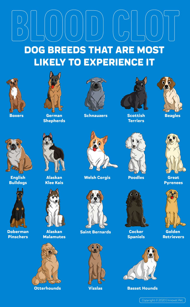 Dogs that are Most Likely to Experience Blood Clots