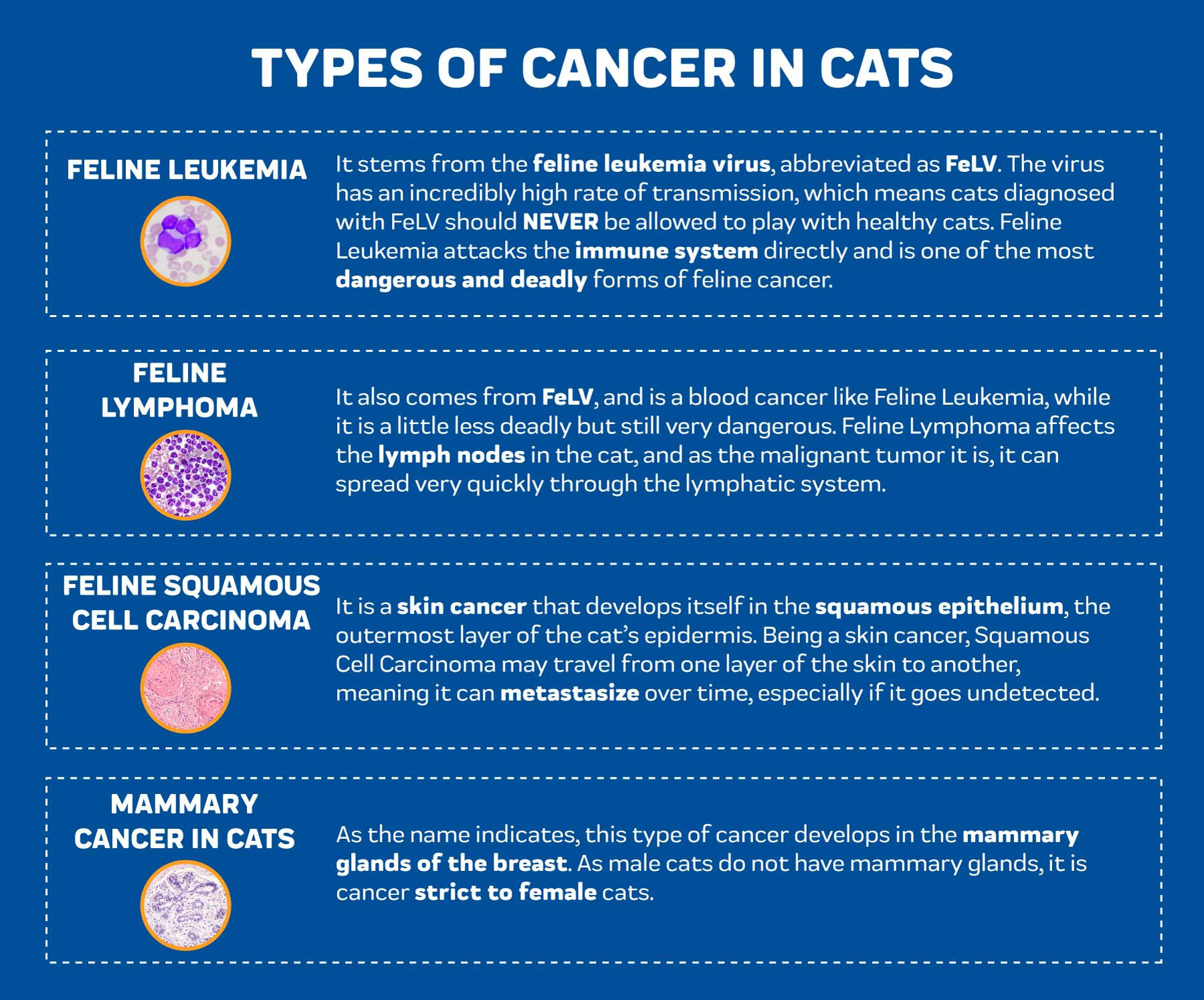 Types of Cancer in Cats
