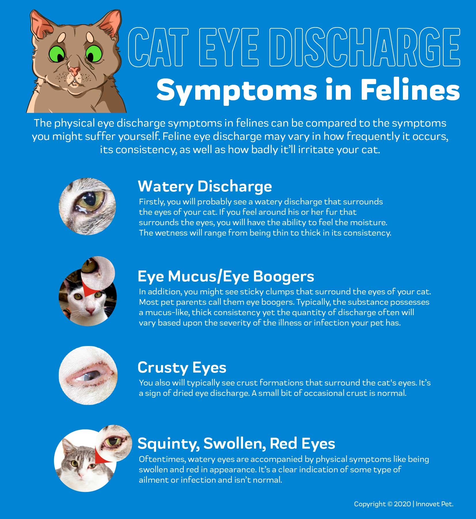 Cat Eye Discharge Innovet Pet
