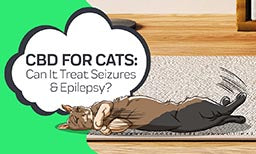 cbd for cat seizures and epilepsy