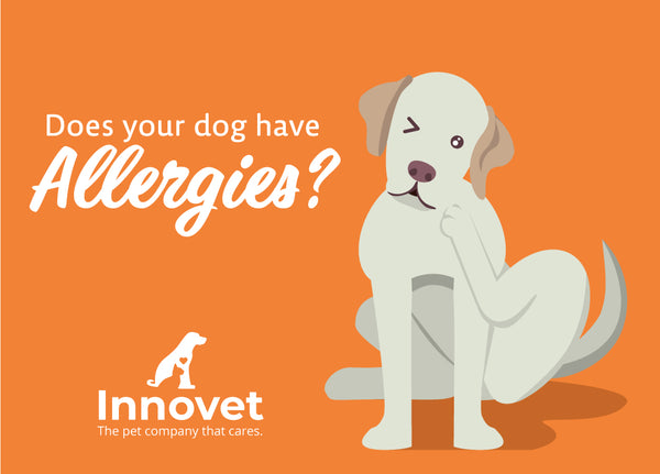 Does Your Dog Have Allergies