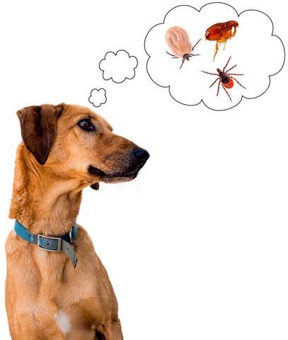 dog flea and tick