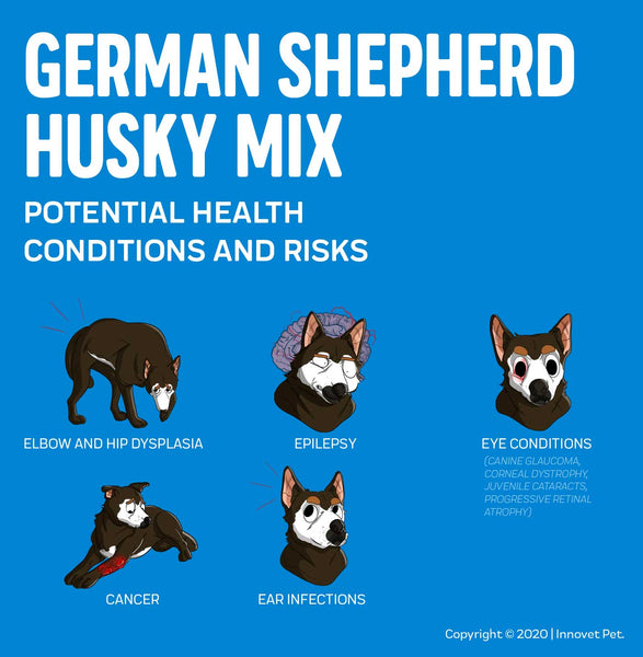 German Sheherd Husky Mix Potential Health Issues
