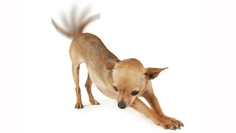 what does a dog wagging its tail mean?