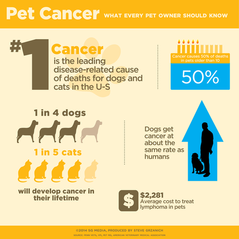 Dog and cat cancer