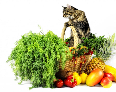 Healthy diet for dogs and cats