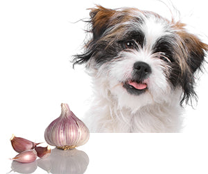 Garlic for my dog and cat