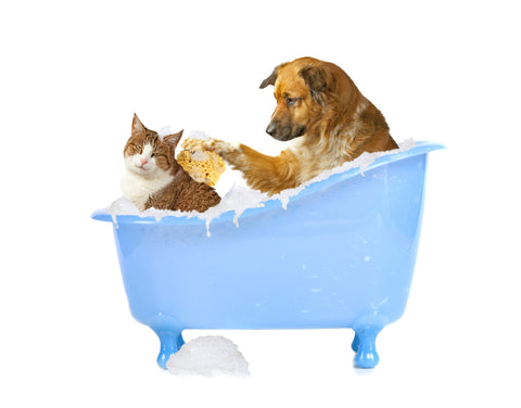 How to wash dog and cat