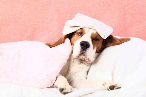 How to know if my pet is sick or ill