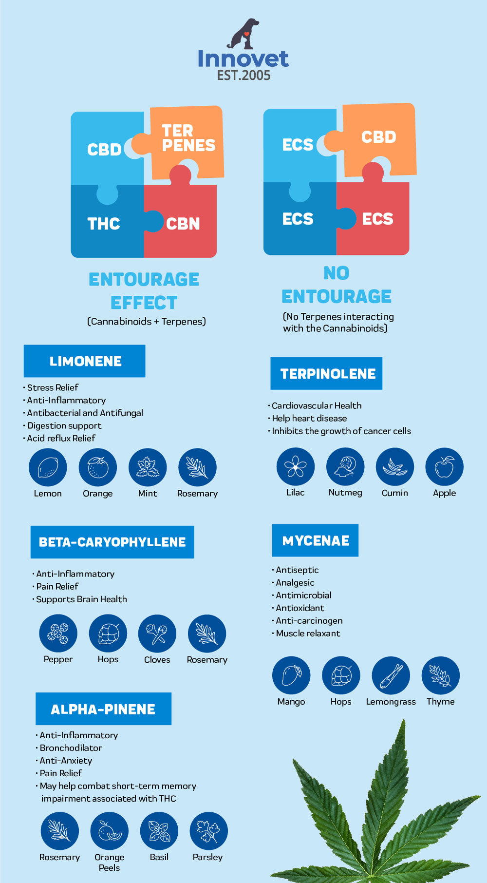 What are terpenes and what is entourage effect