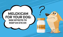 Meloxicam For Your Dog: Side Effects To Keep An Eye On