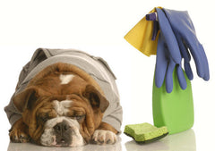 Can everyday cleaning supplies harm your pet? Toxic ingredients for dogs