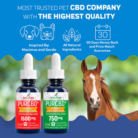 CBD Oil for Horses to reduce inflammation