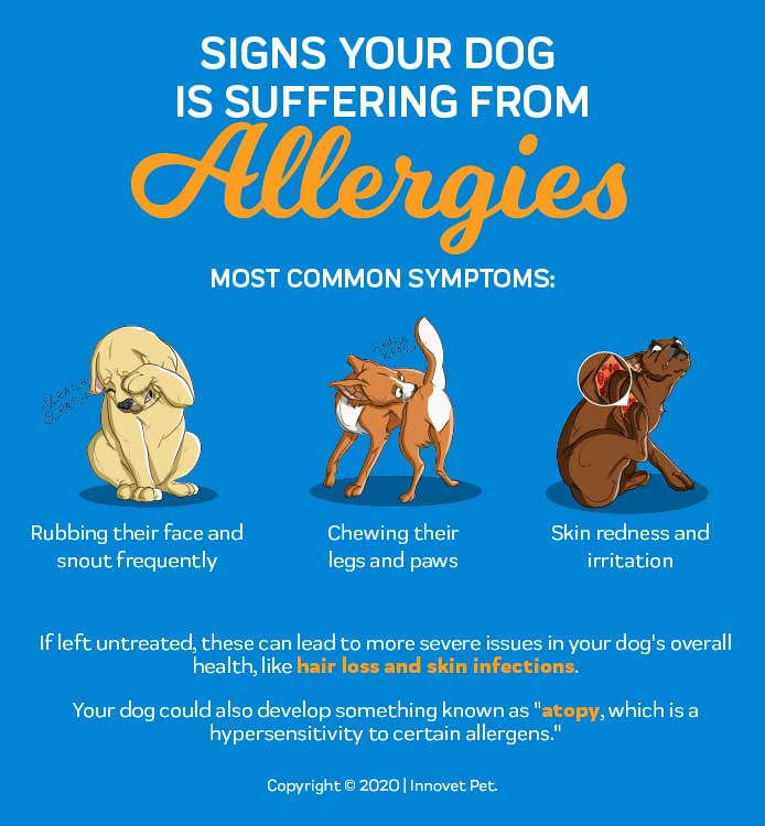 Signs Your Dog is Suffering from Allergies