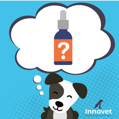 The Supplement That's Revolutionizing Pet Healthcare And Why