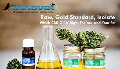Raw, Gold Standard, Or Isolate: Which CBD Oil Is Right For You And Your Pet | Innovet Pet