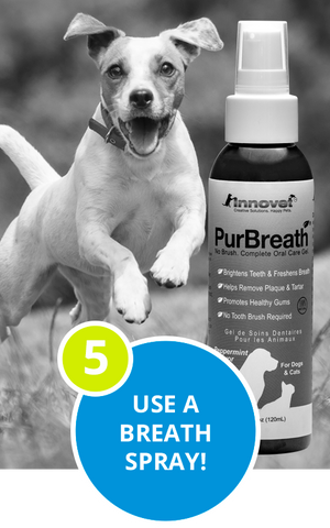 A professional dog breath spray gives you quick easy care.