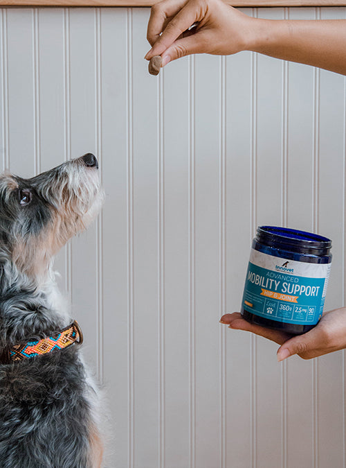 joint supplements for dogs, glucosamine and chondroitin, joint health