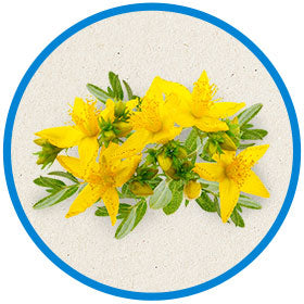 St John's wort to help dogs relax