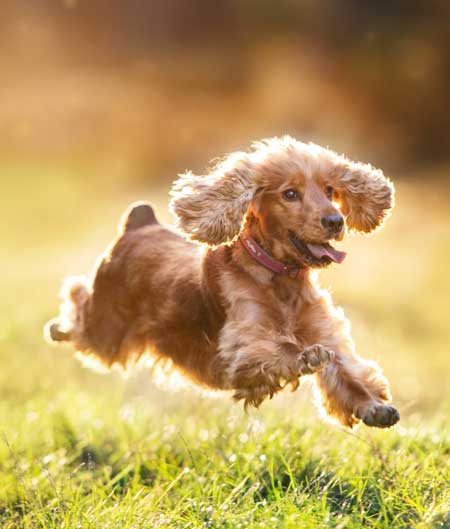 dogs fish oil, fish oil supplements, EPA and DHA