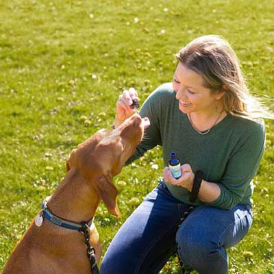 What are the Side Effects of CBD Oil for Dogs