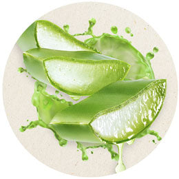 Aloe Vera for immediate relief of dry irritated skin for dogs