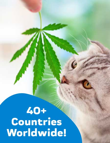 oil for your cat, benefits of cbd