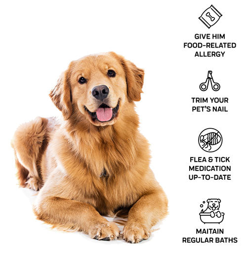 treatment for your dog's itchy spots